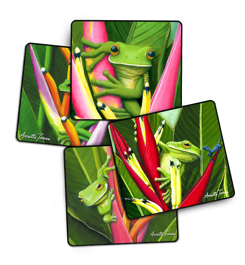 Frog Drink Coasters - 4 Assorted in a Gift Box